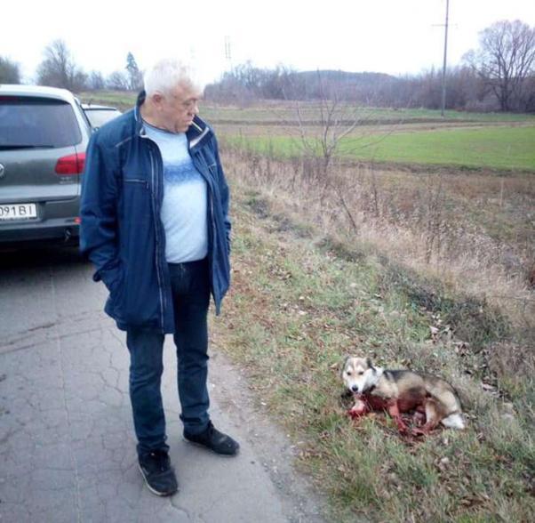 Чоловік і поранена собака
