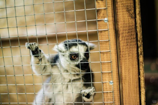 Zoo Світ контактна виставка мавпочок та їх друзів. Розіграш квитків