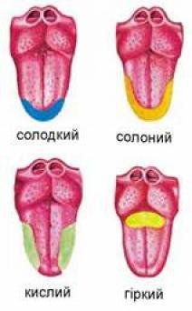 """Результат пошуку зображень за запитом """"розташування рецепторів на язику"""""""