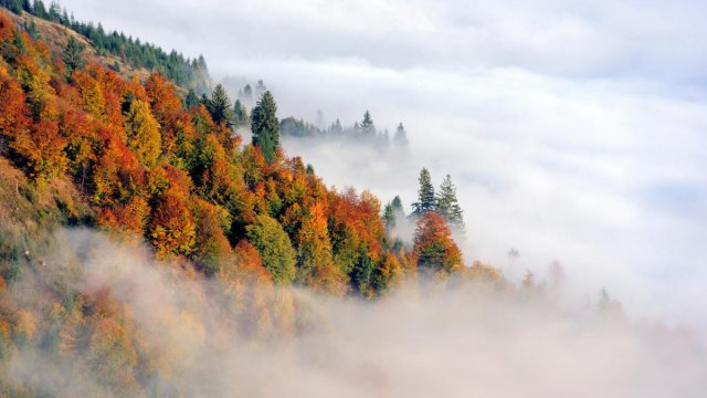 Туман  - фото 393560