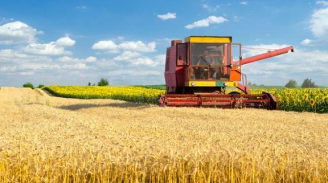В Україні зросло сільськогосподарське виробництво | AgroReview