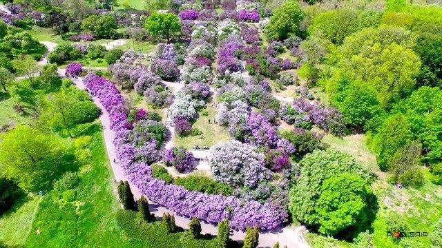 Київський ботанічний сад імені Гришка  - фото 406841