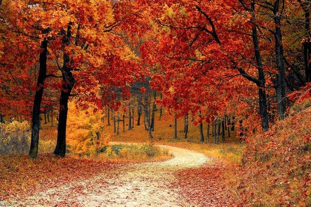 17 жовтня 2020 – яке сьогодні свято: традиції, заборони і прикмети - фото 430011