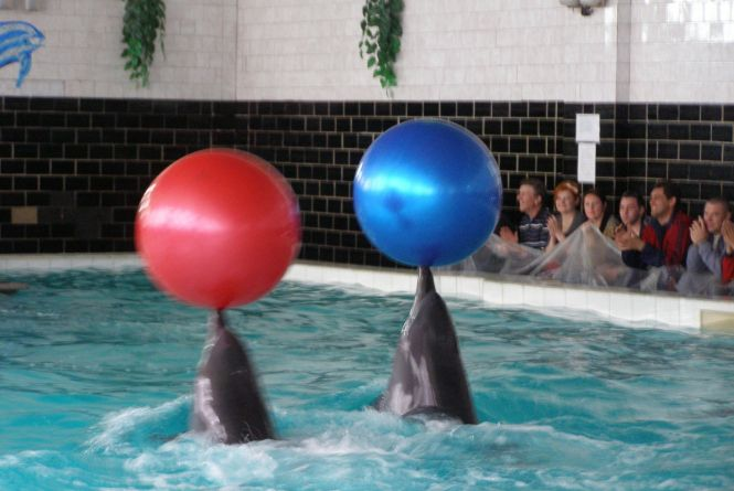 Дельфінів з Хмільника Лілу й Аделіну по $100000 кожен випустили в море? Такий висновок слідчого