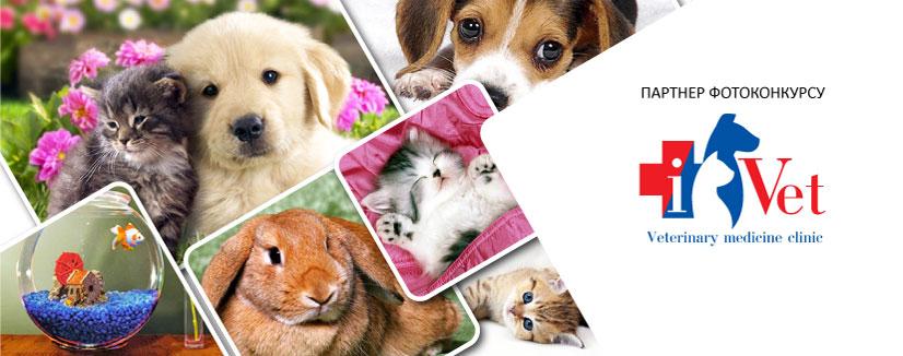 """Фотоконкурс  """"Таємне життя домашніх тварин"""""""