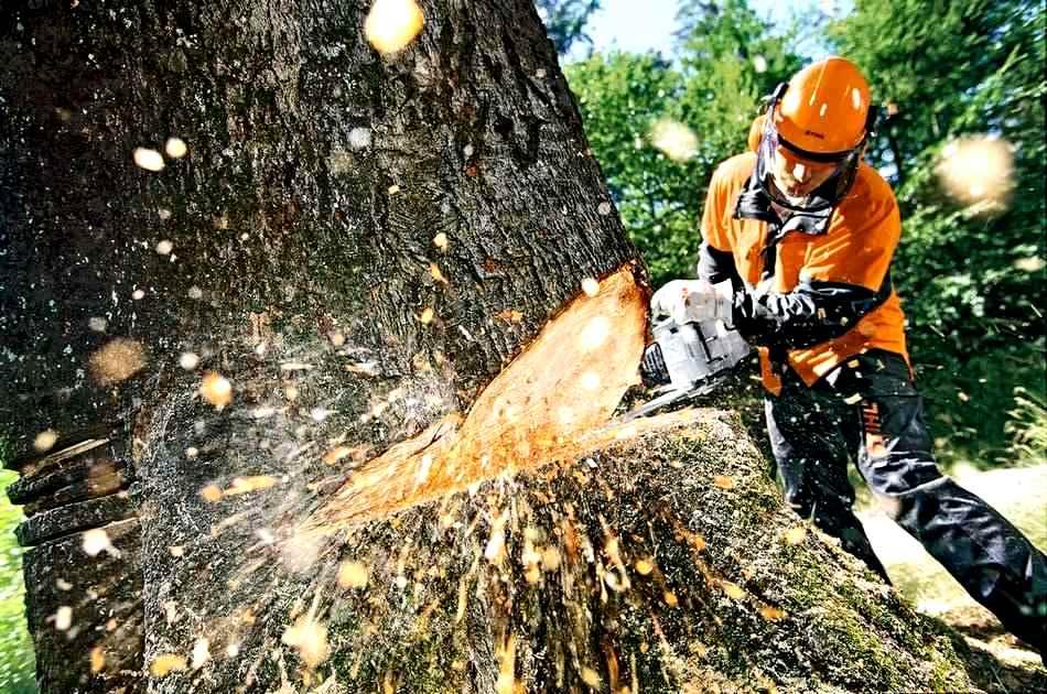 Картинки по запросу вирубка дерев