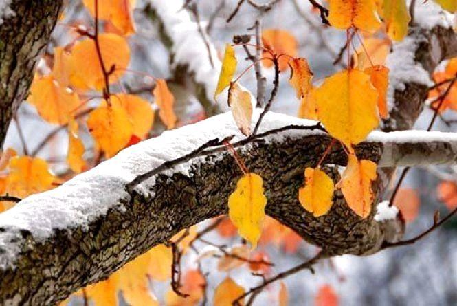 Похмуро, без опадів, до +15 градусів, - якою буде погода в Житомирі 13 листопада