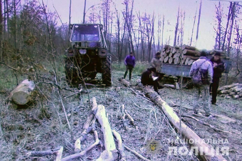 В Олевському районі місцевий житель незаконно зрізав 7 дубів