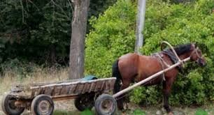 На Звягельщині 8-річний хлопчик постраждав, потрапивши пыд підводу з конем