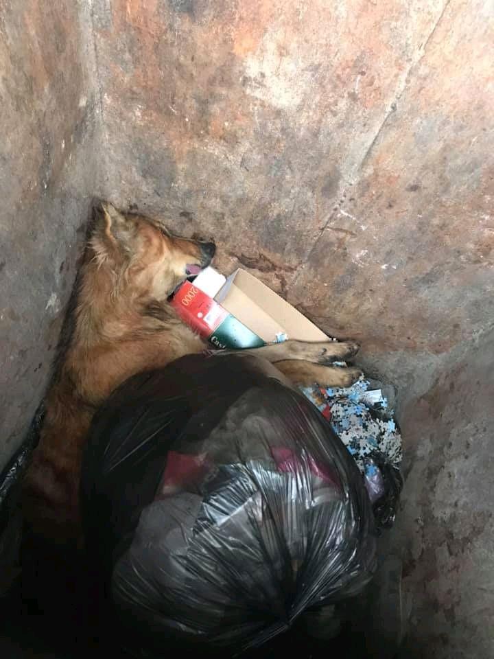 Собаці - собача смерть? У Бердичеві вбили пса і викинули на смітник