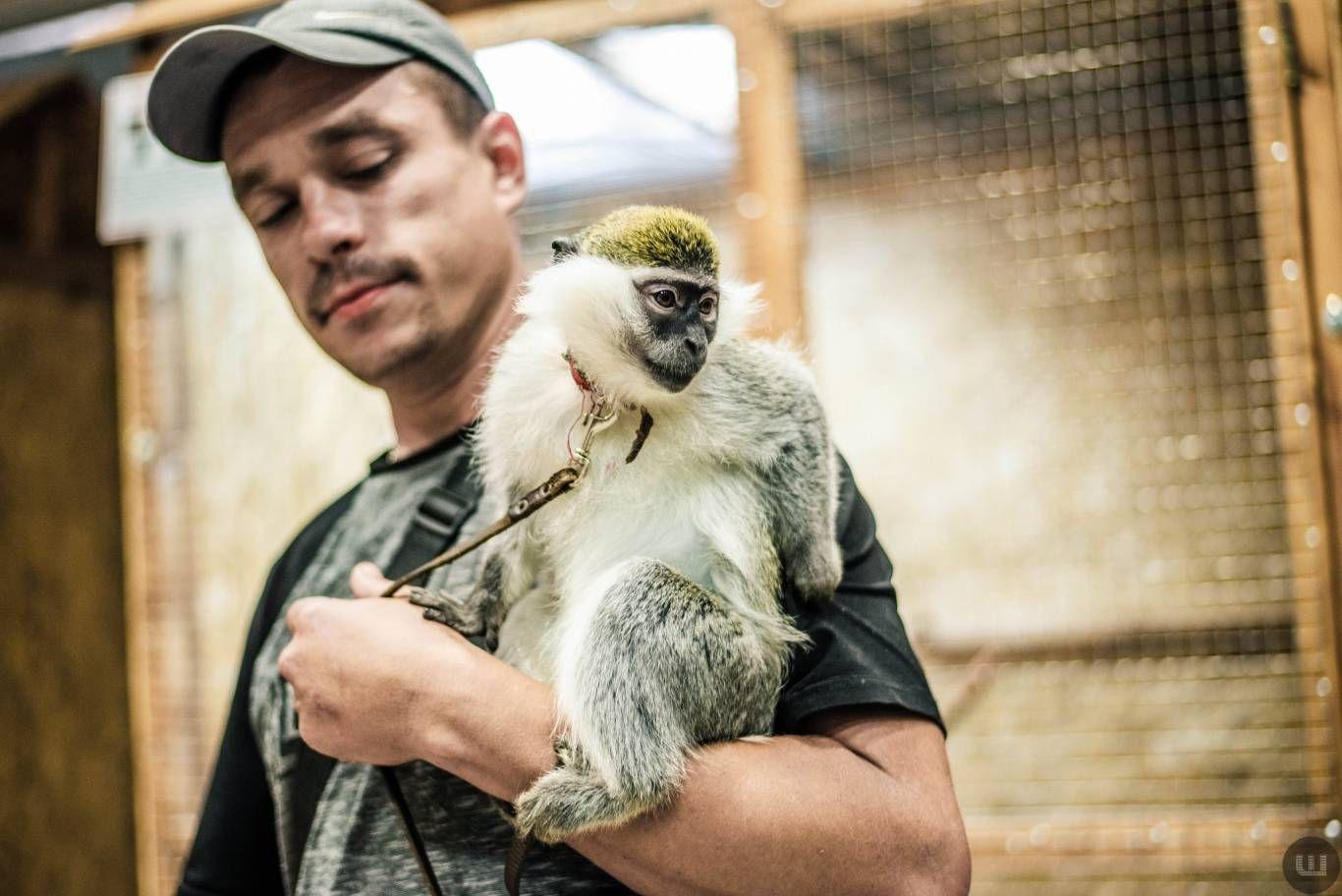 Світ джунглів і майстер-класи: куди піти в Хмельницькому на вихідних