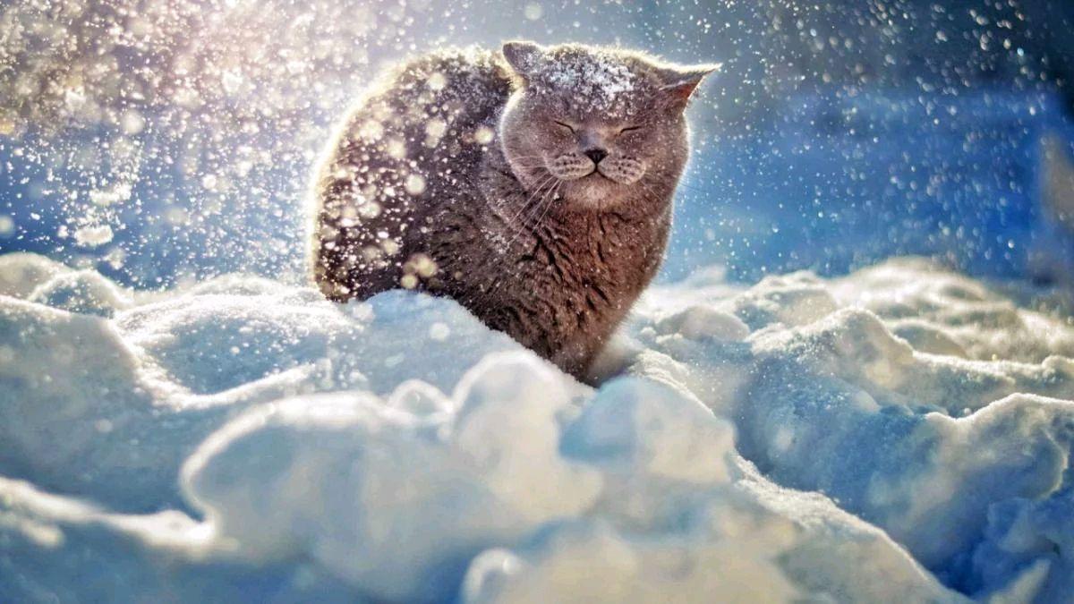Сніг, мокрий сніг і ще трохи снігу: найближча погодна перспектива