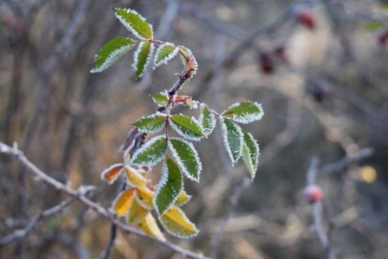Похмуро без опадів, підморозить до -2, - погода у Житомирі 4 грудня